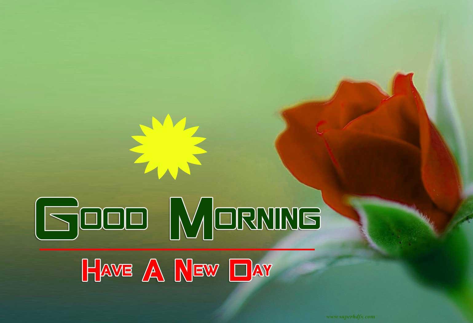 Free Flower hd good morning Pics Download