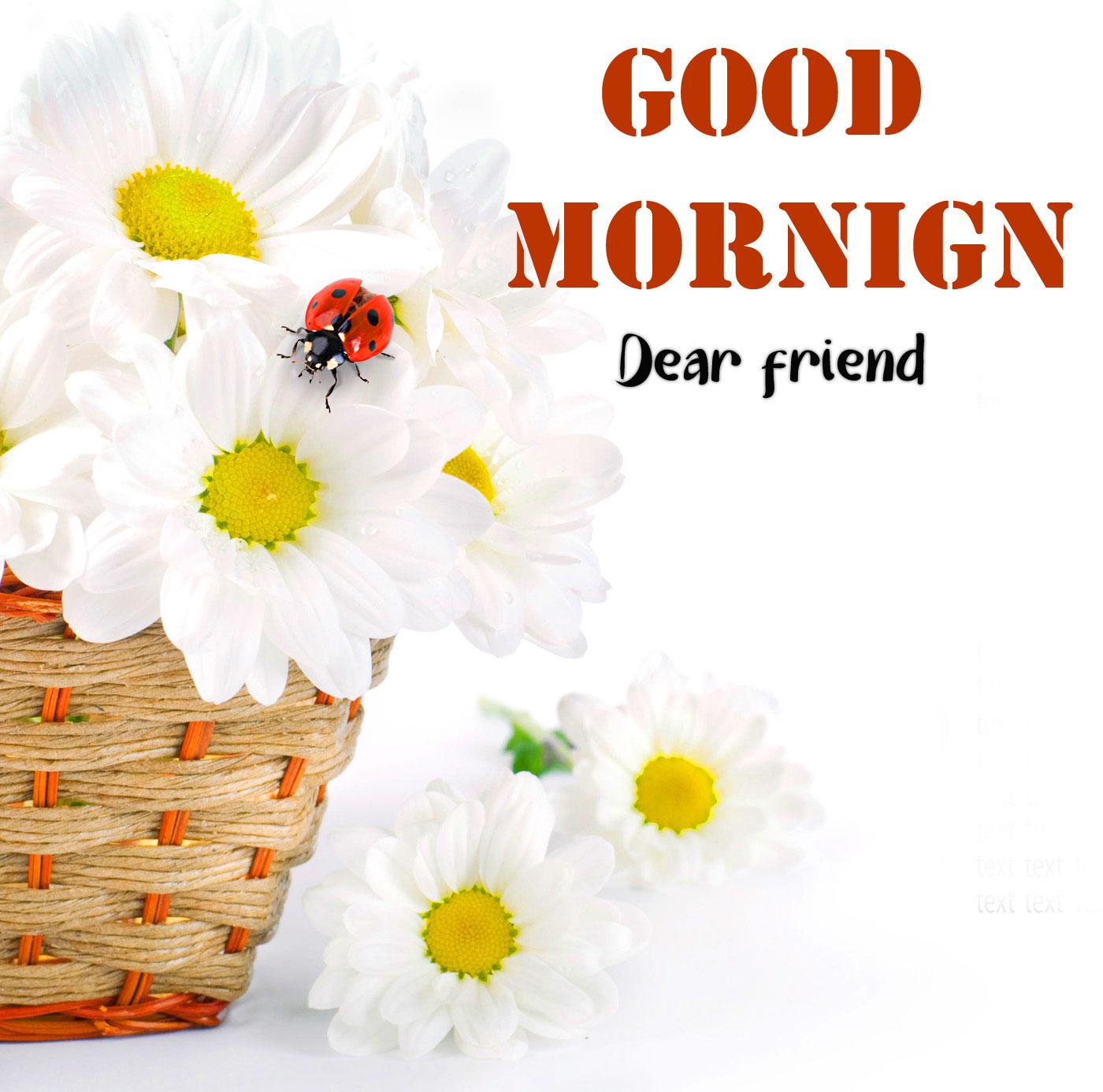Free Good Morning Tuesday Pics Photo Download