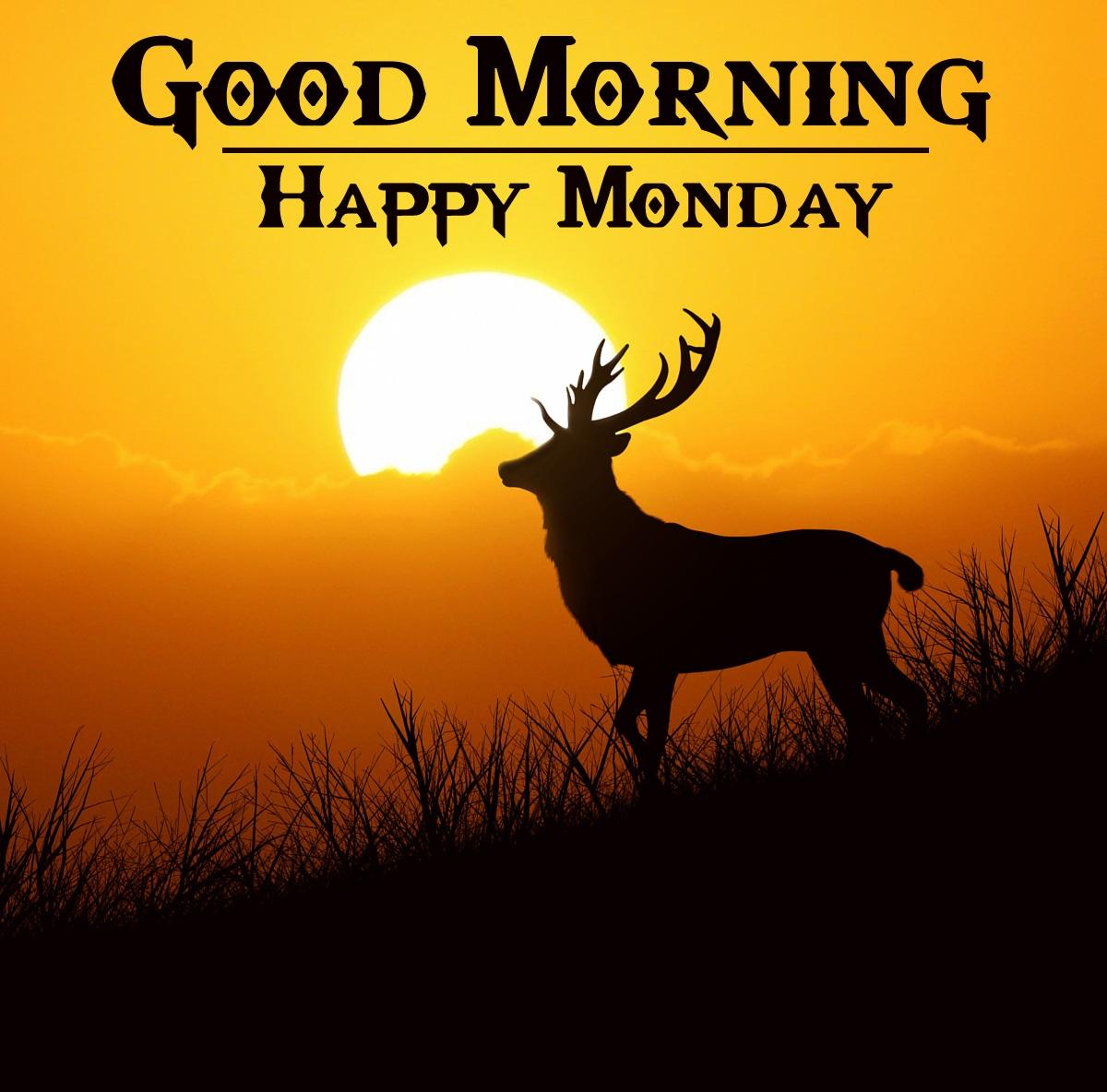 Free Monday Good Morning Wallpaper Download 1