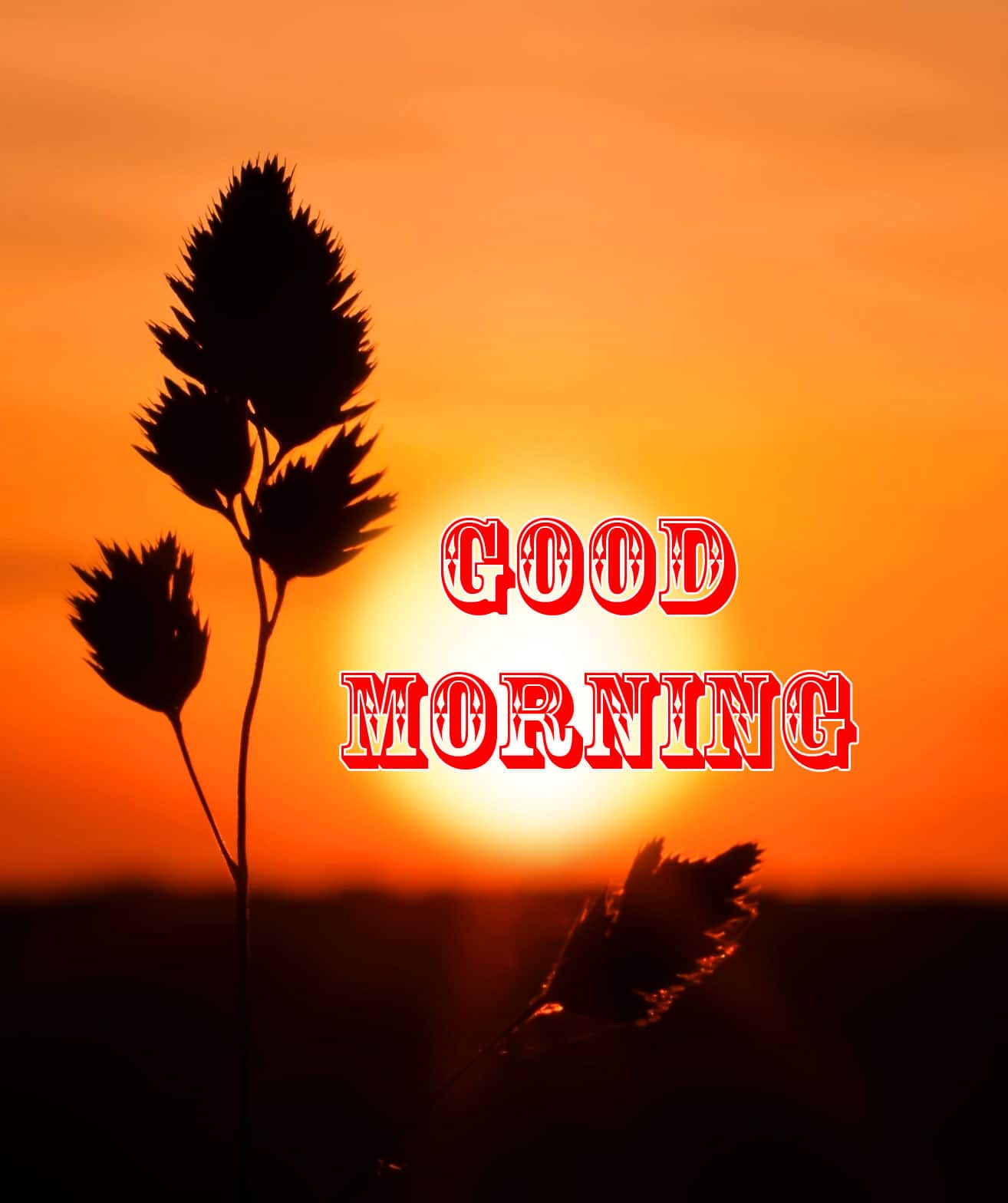Free Top Good Morning Wishes Pics HD Download 1