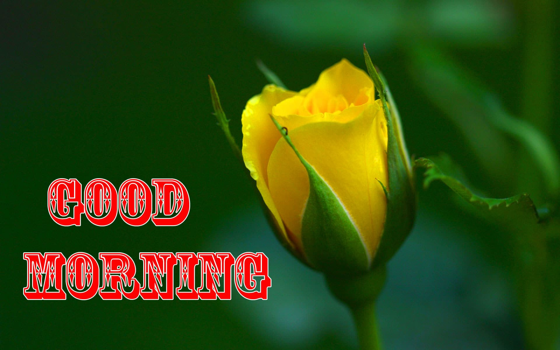 Free Yellow Flower Good Morning Wishes Images Download 1