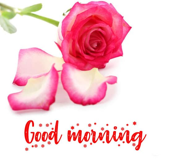 Full HD Good Morning Wishes Images Download