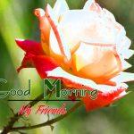 Good Morning Images Wallpaper 10