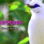 Good Morning Images Wallpaper 15