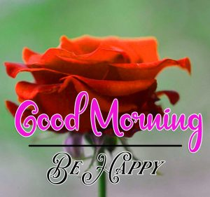 Beautiful Rose Best Good Morning Images Pics Download