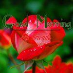 Good Morning Images Wallpaper 19