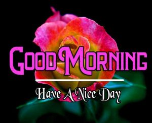 Best Good Morning Images Pics With Have a Nice Day