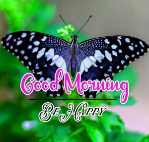 Butterfly Best Good Morning Images Pics Download