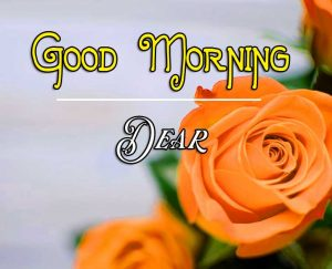 Rose Free Best Good Morning Images Pics Download