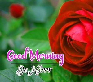 Beautiful HD Red Rose Best Good Morning Images Pics Download