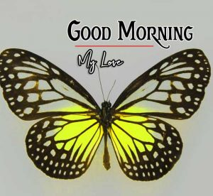 Best Good Morning Images Pics Download In HD