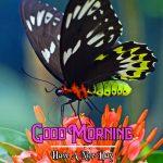 Good Morning Images Wallpaper 40