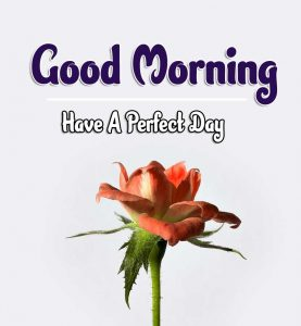 Best Good Morning Images Pics Wallpaper for girlfriend
