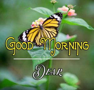 Best Good Morning Images Wallpaper Latest Download