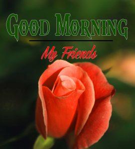 Good Morning Images Wallpaper 81
