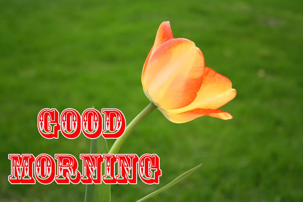 Good Morning Wishe