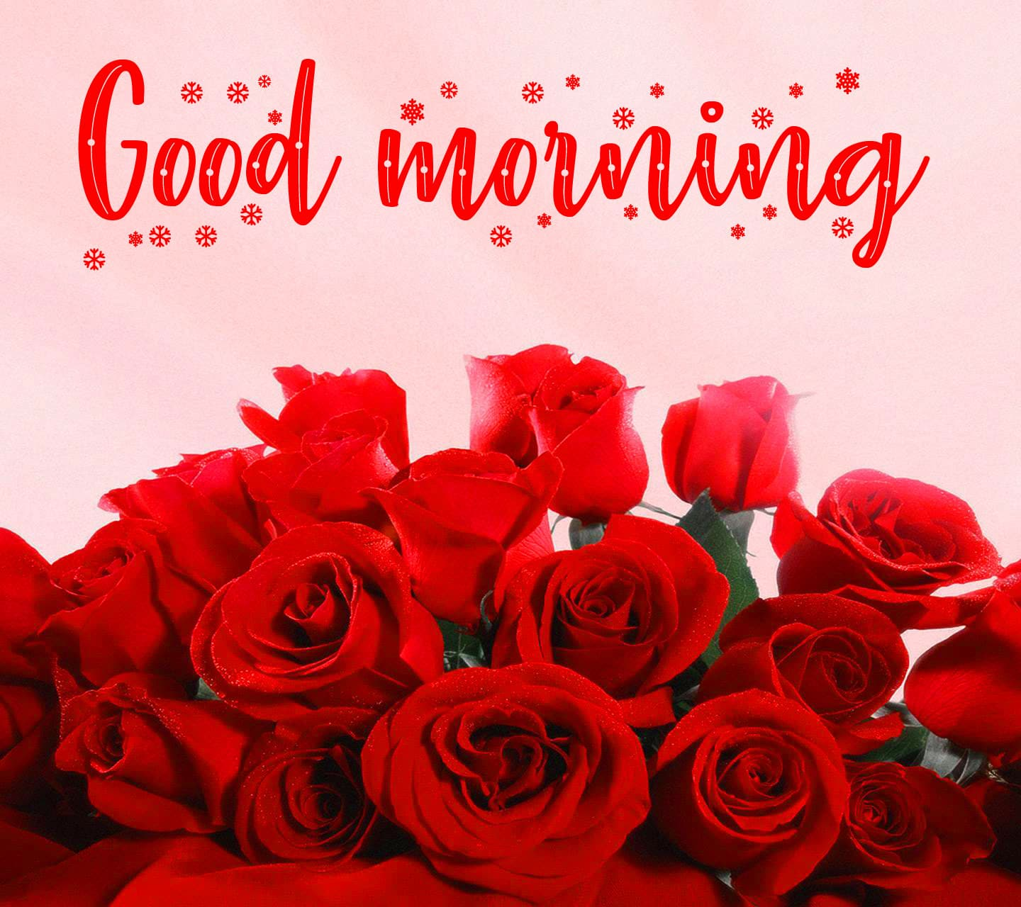 Good Morning Wishes Images for Girlfriend With Red Rose