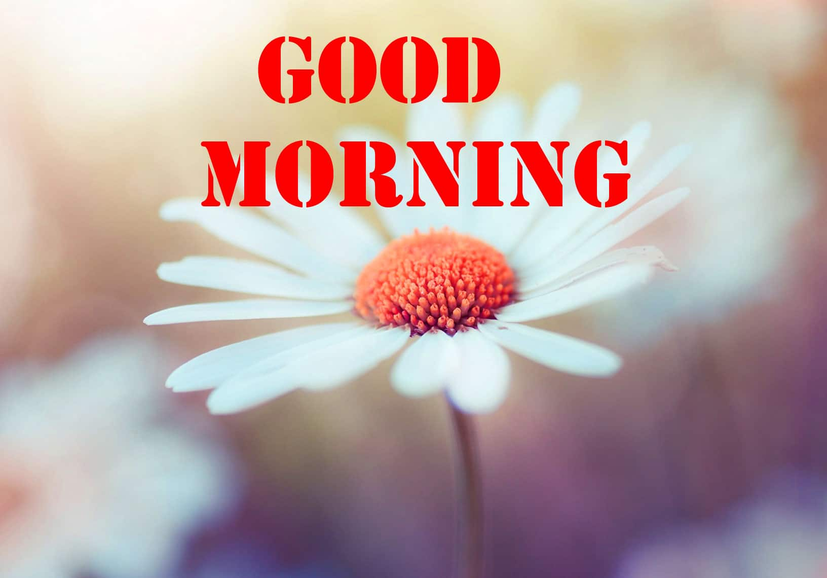Good Morning Wishes Pics New Download