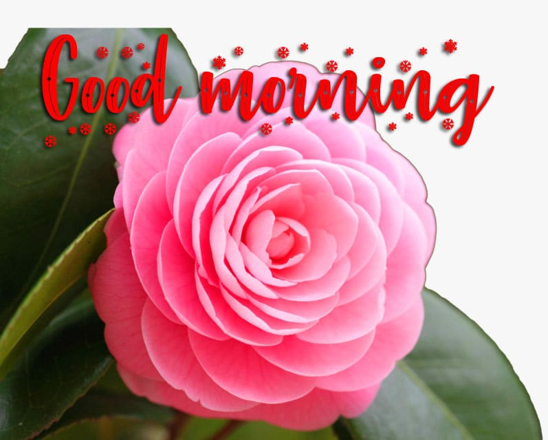 Good Morning Wishes Wallpaper HD Download