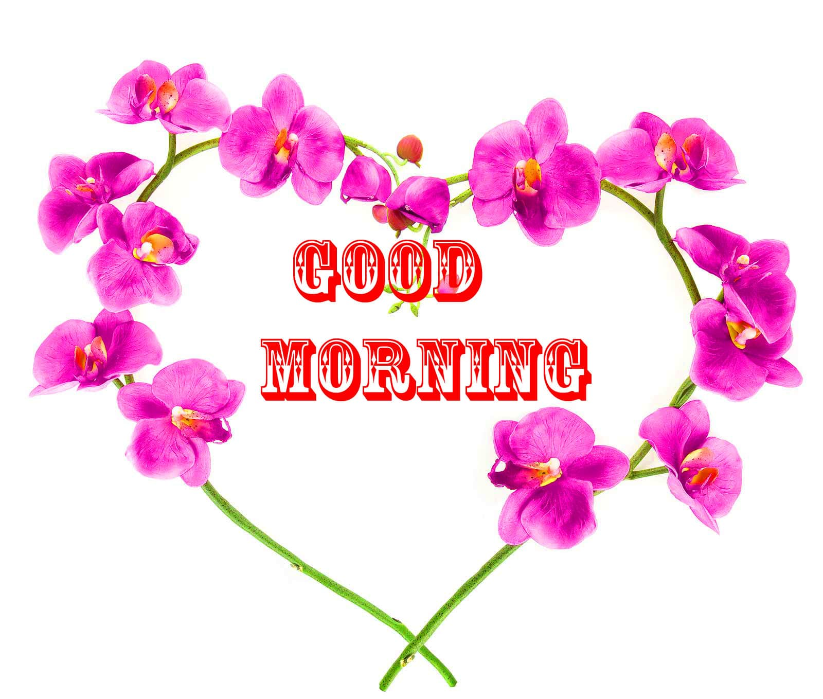 Good Morning Wishes Wallpaper HD