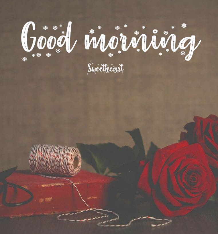 Happy Red Rose Free Good Morning Wishes Images Download