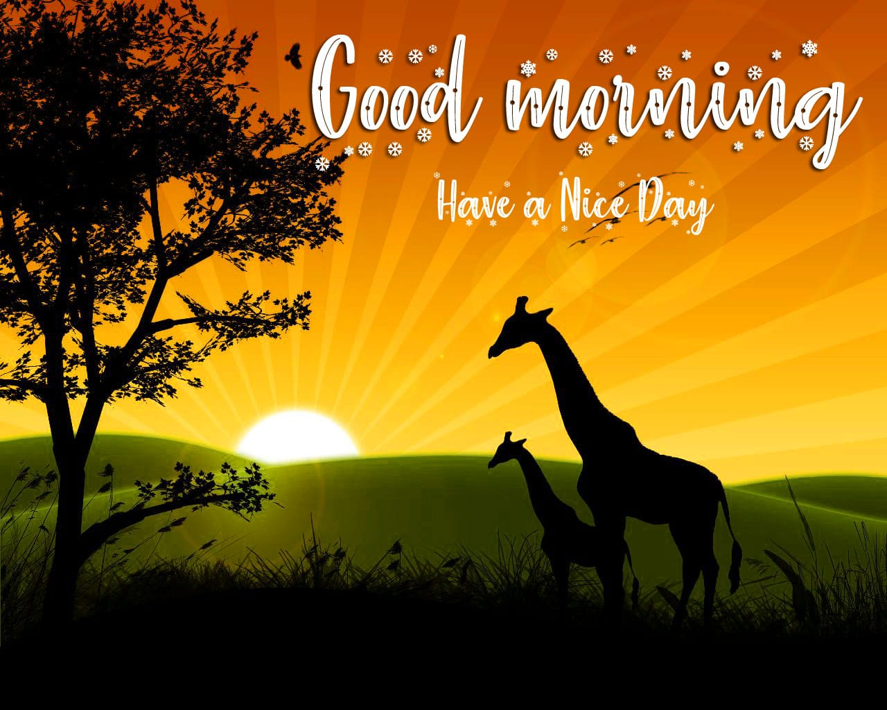 Latest Good Morning Wishes Pics Download