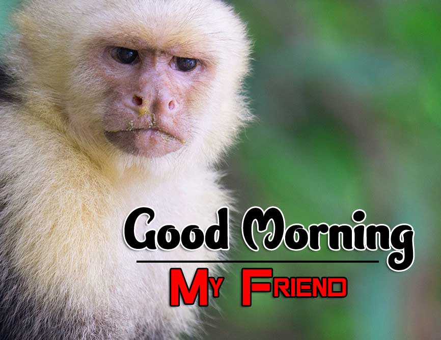 Monkey Fuuny Good Morning Images