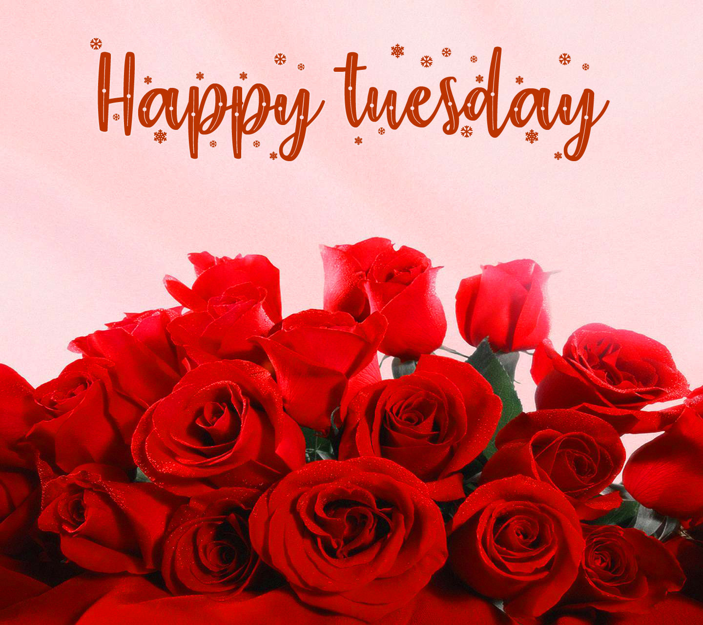 New Free Good Morning Tuesday photo Download