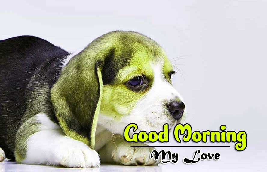 Puppy Dog All Funny Good Morning Pics Images Download Free