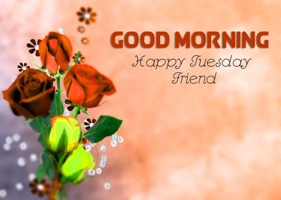 Rose Free Good Morning Tuesday Pics Wallpaper for Whatsapp