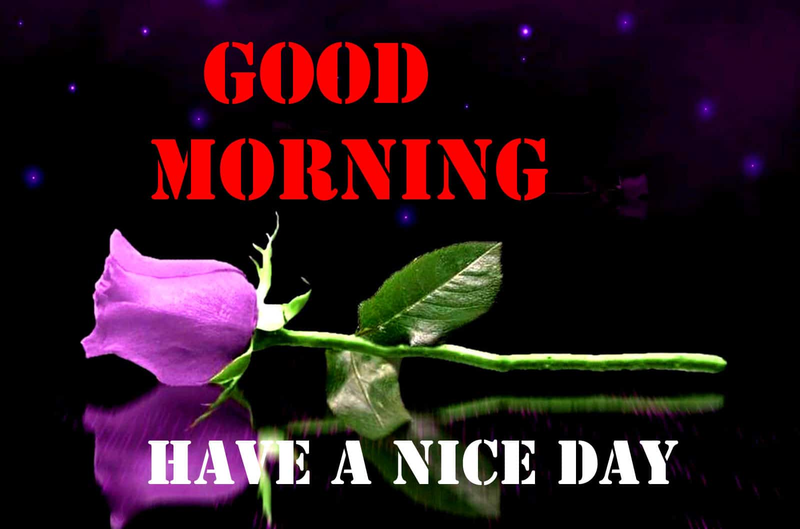Rose Free Good Morning Wishes Images Download