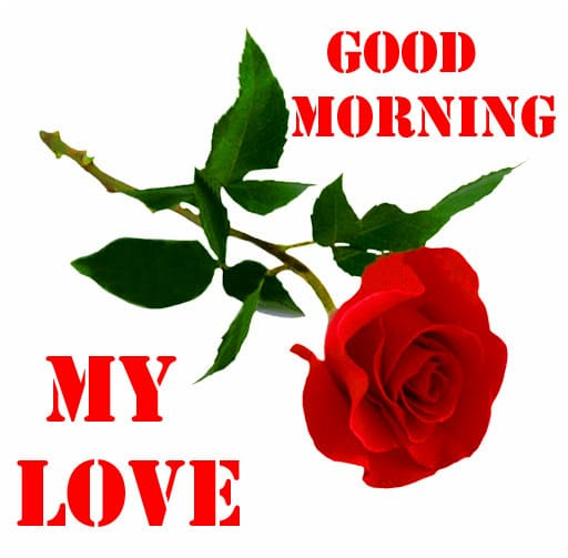 Rose Good Morning Wishes Images Free Download