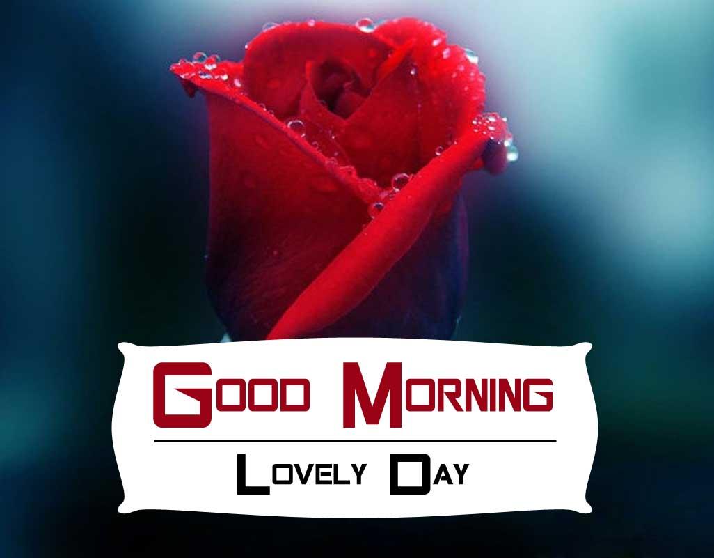Rose Good Morning Wishes