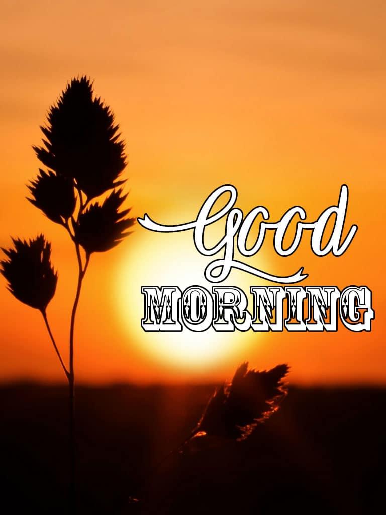 Sunrise Flower Good Morning Wishes Images