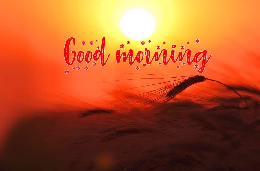 Sunrise Free Good Morning Wishes Images Download 2