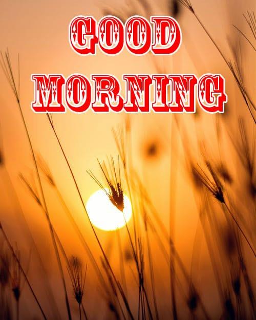 Sunrise Free Good Morning Wishes Images