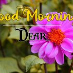 good morning images for flower 55