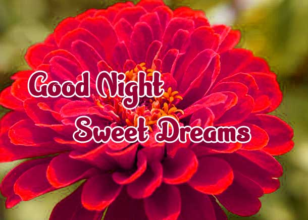 good night sweet dreams images for friends 100