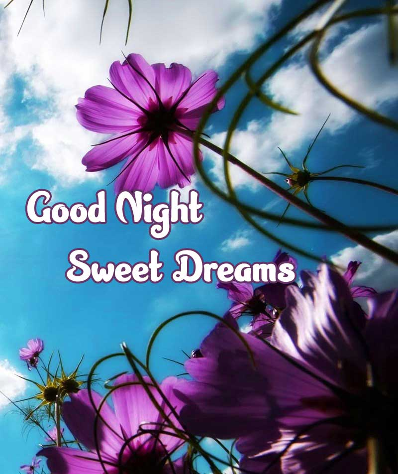 good night sweet dreams images for friends 25