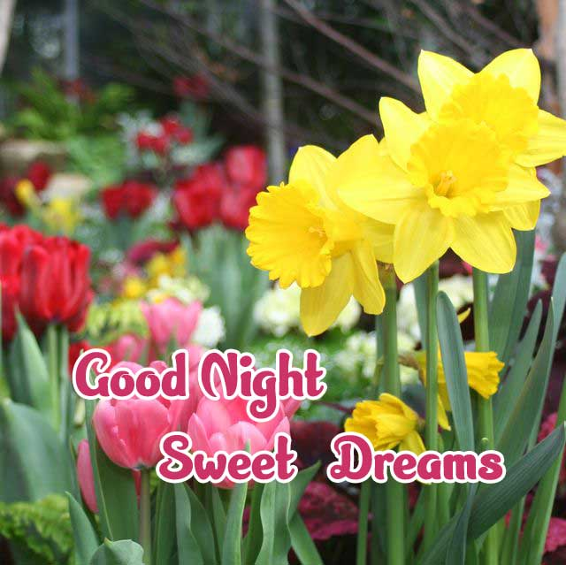 good night sweet dreams images for friends 44