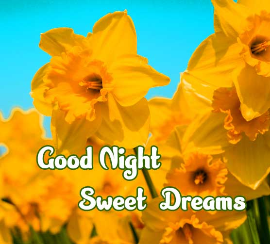 good night sweet dreams images for friends 78