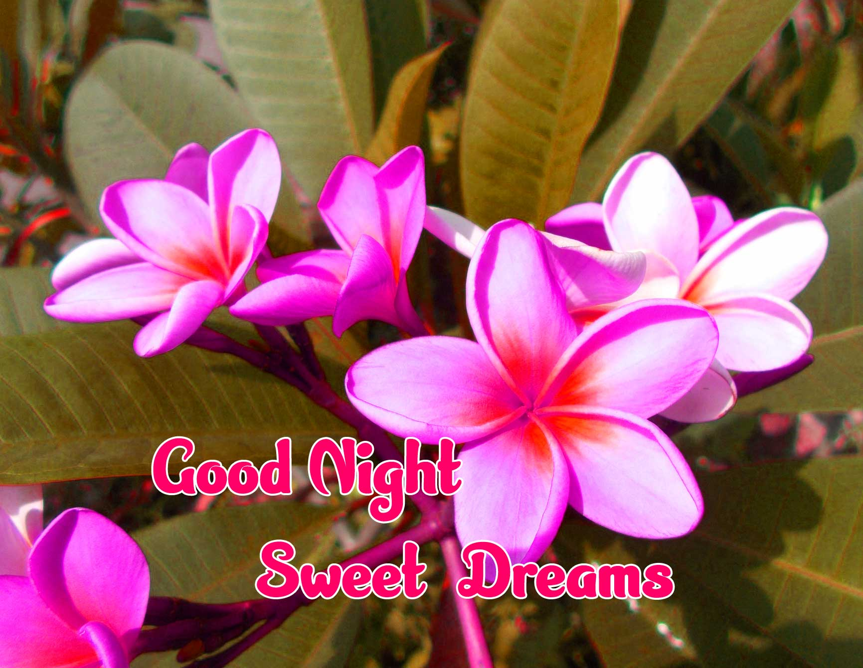good night sweet dreams images for friends 79