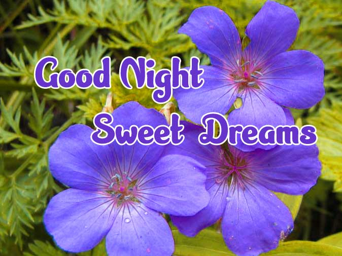 good night sweet dreams images for friends 89