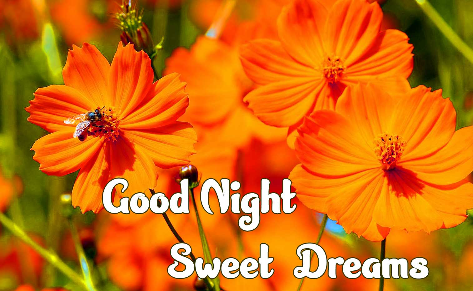 good night sweet dreams images for friends 96