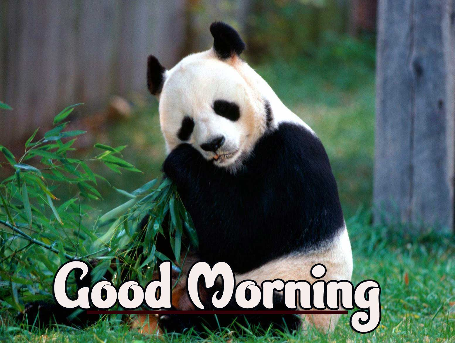 Animal Bird Lion Good Morning Wishes Images Pics Download
