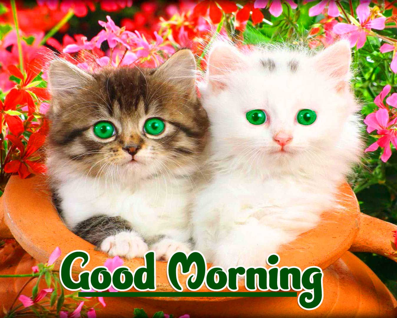 Animal Bird Lion Good Morning Wishes Pics Pictures Download