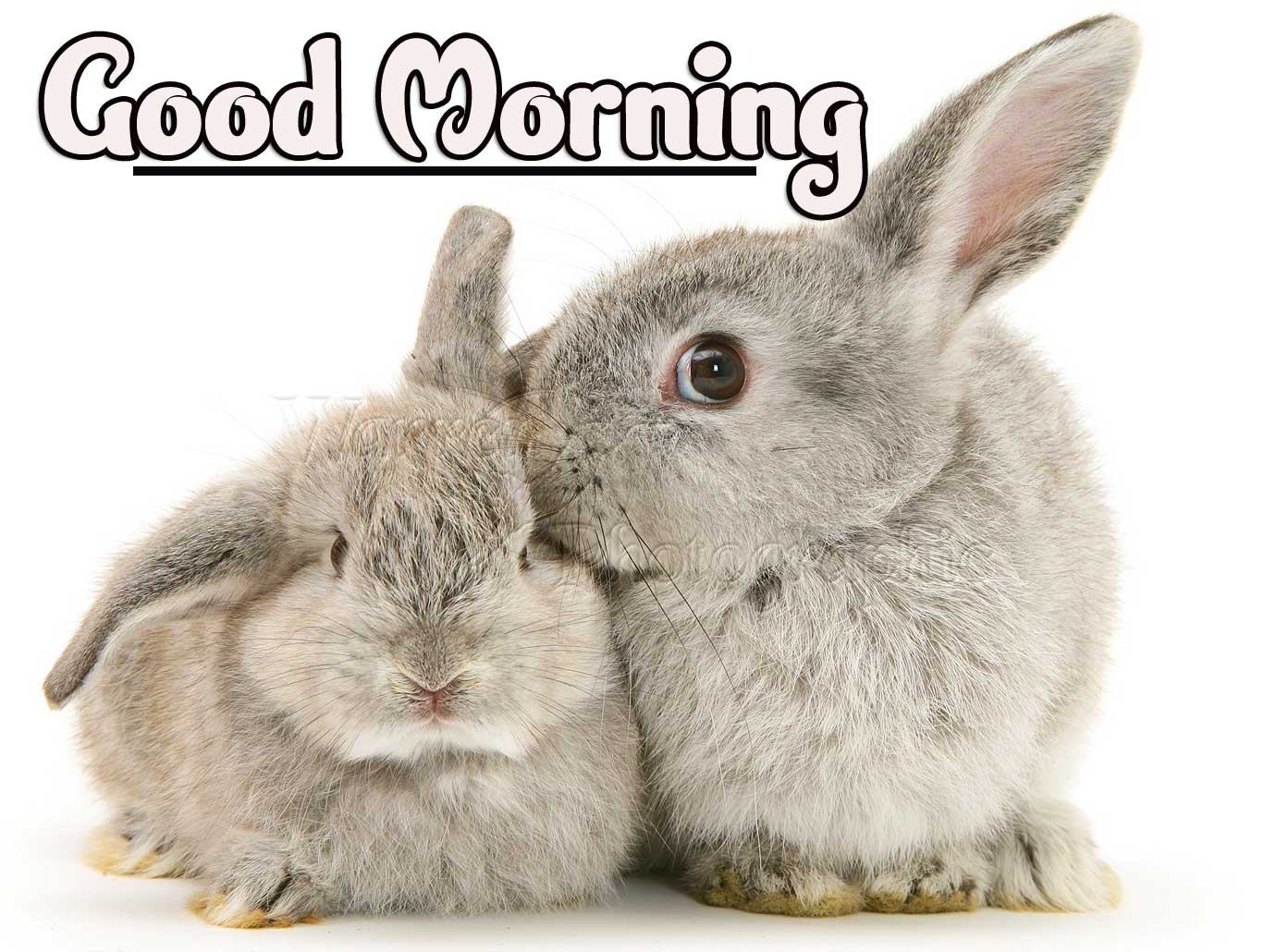 Animal Bird Lion Good Morning Wishes Wallpaper for Facebook