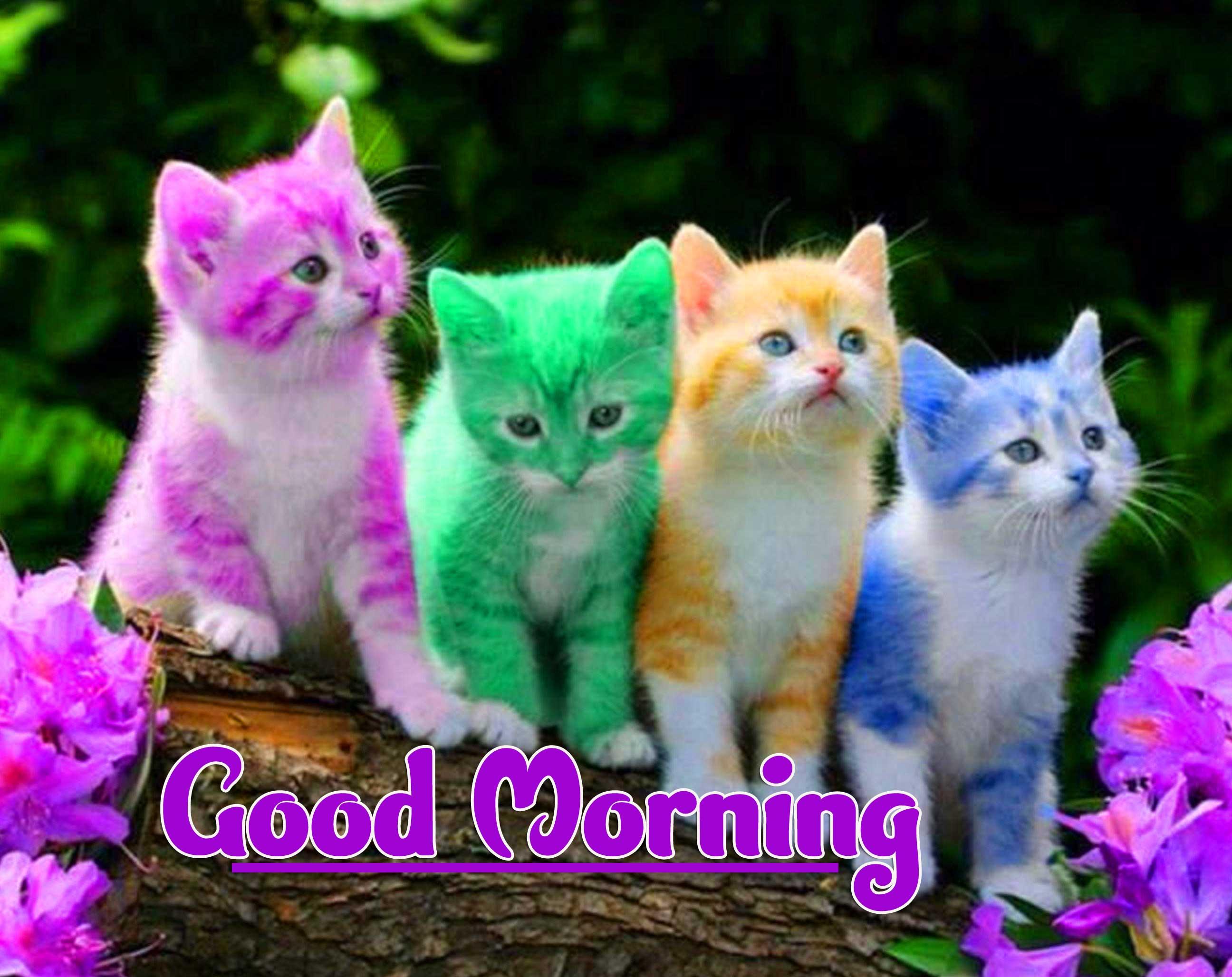 Animal Bird Lion Good Morning Wishes pics HD Download