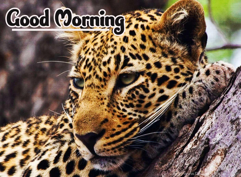 Tiger Animal Bird Lion Good Morning Wishes Pics Download