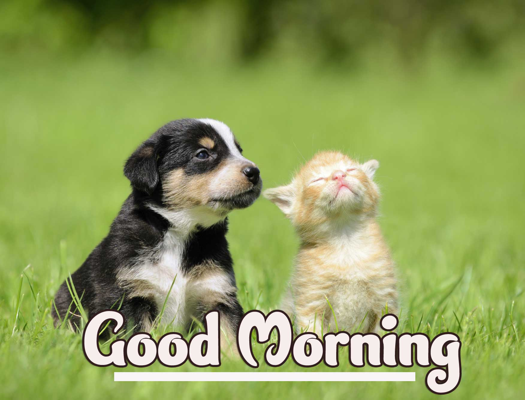 Animal Bird Lion Good Morning Wishes Wallpaper With Cute Puppy Lover